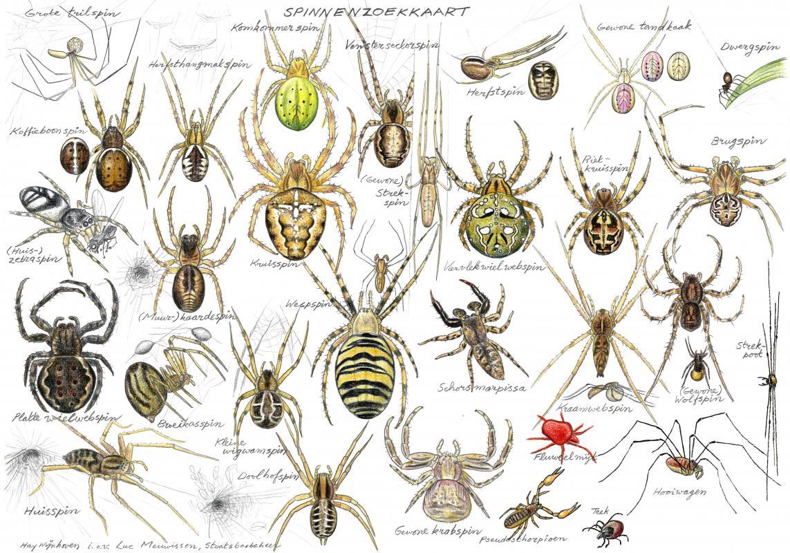 Gratis Kleurplaten Spinnen.Zoekkaart Spinnen Webwinkel Ark