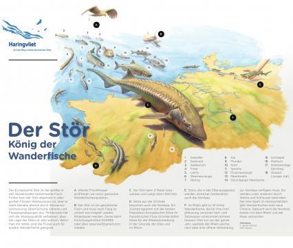 Factsheet Steur DE