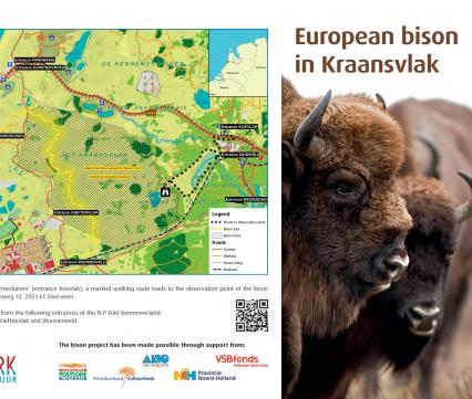 Folder European bison in Kraansvlak