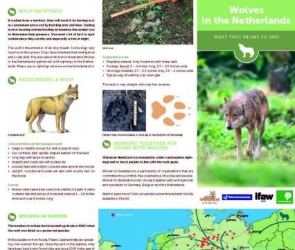 Wolves in the Netherlands