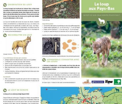 Le loup aux Pays-Bas