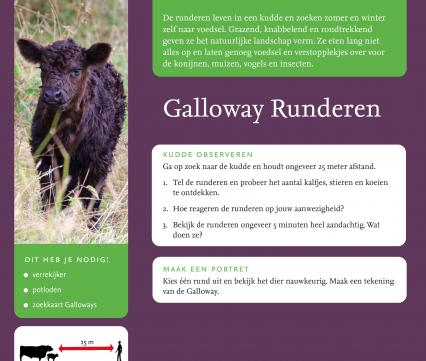Gallowayrunderen