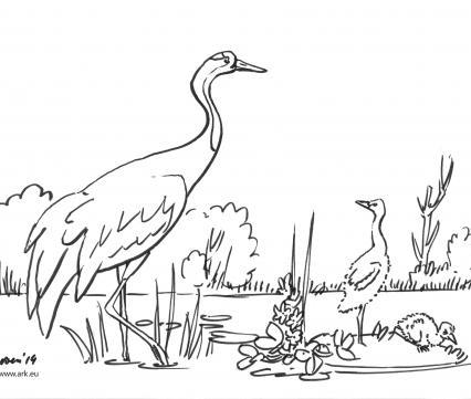 Kleurplaat Kraanvogel