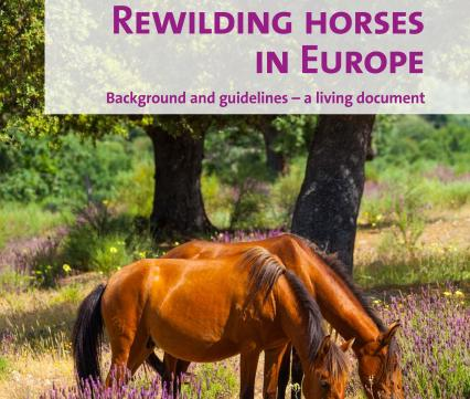 Rewilding horses in Europe