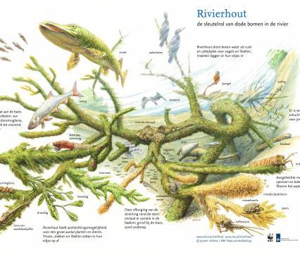 Rivierhout. De sleutelrol van dode bomen in de rivier