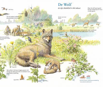 Sleutelroltekening Wolf