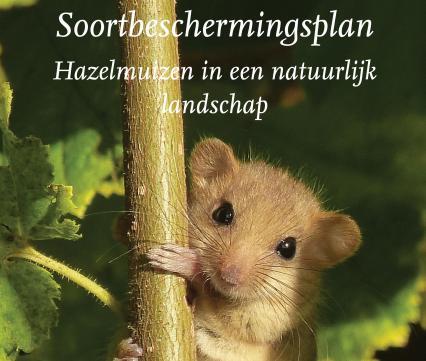 Soortbeschermingsplan Hazelmuis