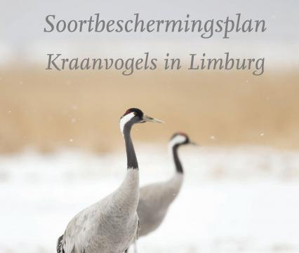Soortbeschermingsplan Kraanvogels