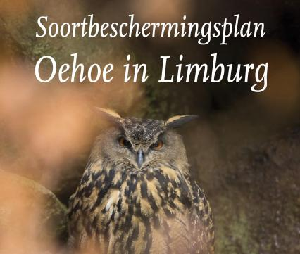 Soortbeschermingsplan Oehoe