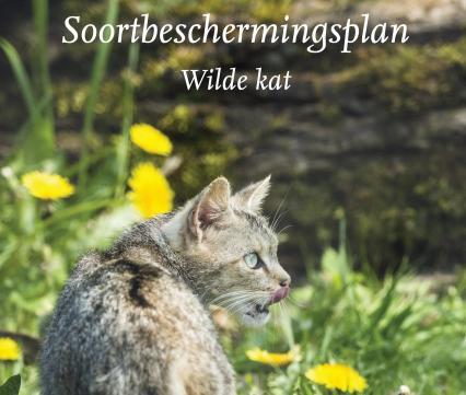 Soortbeschermingsplan Wilde kat