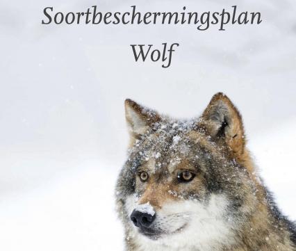 Soortbeschermingsplan Wolf