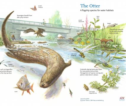 The Otter a flagship species