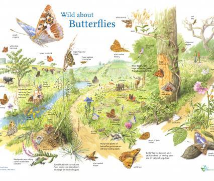Wild about butterflies