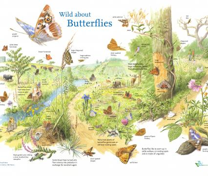 Wild about butterflies