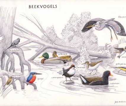 Zoekkaart Beekvogels