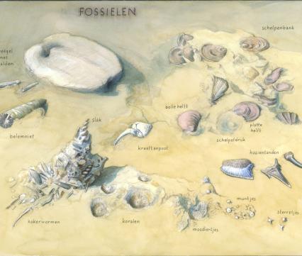Zoekkaart Fossielen