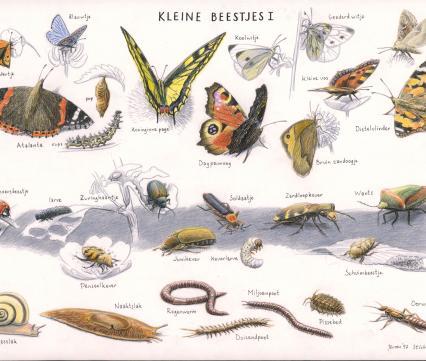 Zoekkaart Kleine Beestjes 1