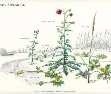 Zoekkaart Pionierplanten