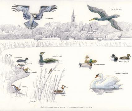 Zoekkaart Vogels Amerongen 1