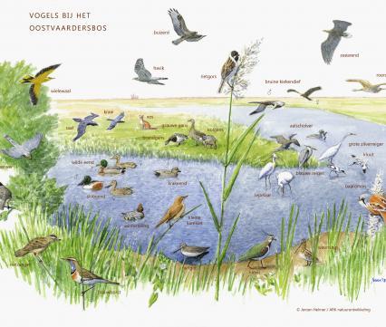 Zoekkaart Vogels bij het Oostvaardersbos