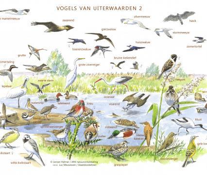 Zoekkaart Vogels van Uiterwaarden 2