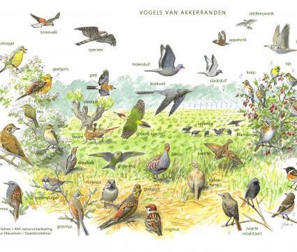 Zoekkaart Vogels van akkerranden