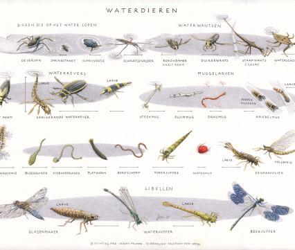 Zoekkaart Waterdieren 1
