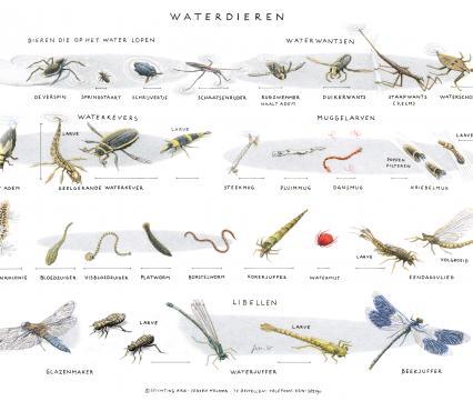 Zoekkaart Waterdieren 2