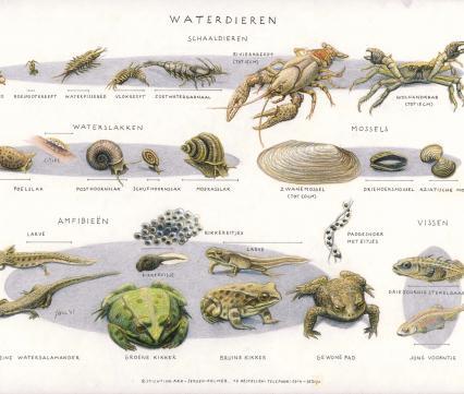 Zoekkaart Waterdieren 3