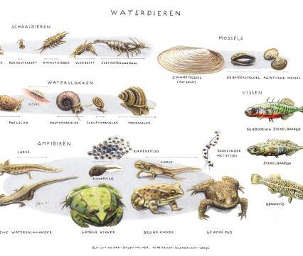 Zoekkaart Waterdieren 4