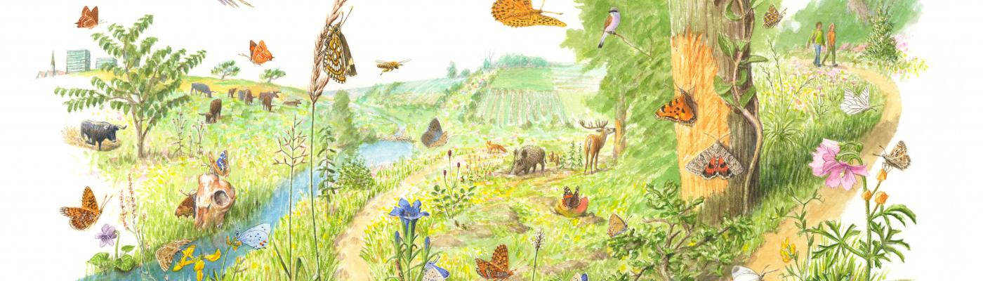 Wild van Vlinders