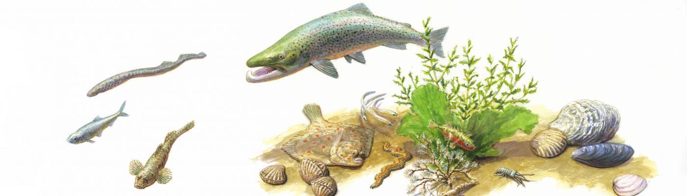 Vissen Haringvliet
