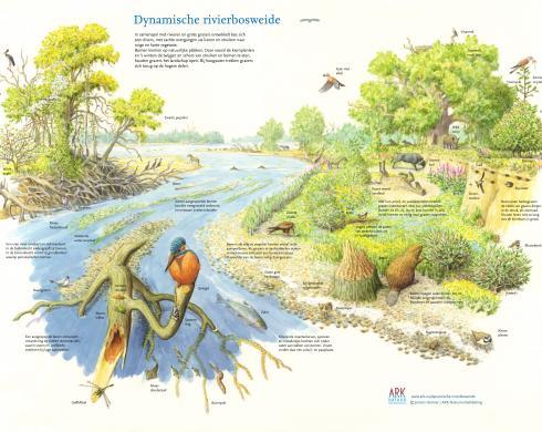 Dynamische rivierbosweide