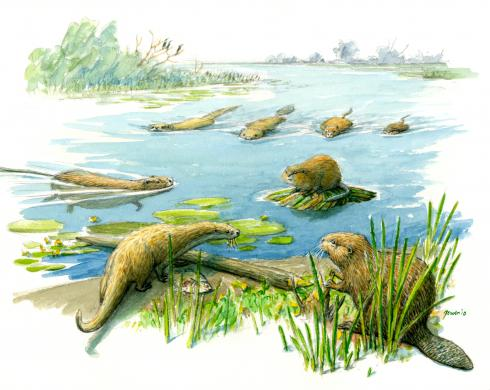 Schoolplaat Otter en anderen