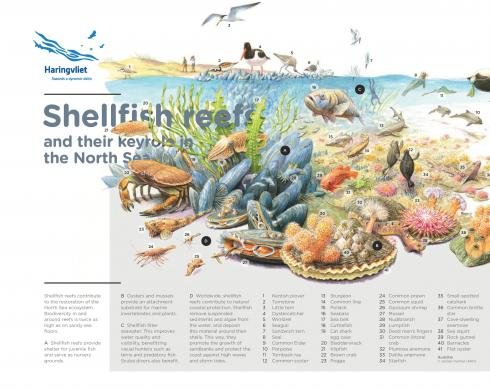 Shellfish reefs