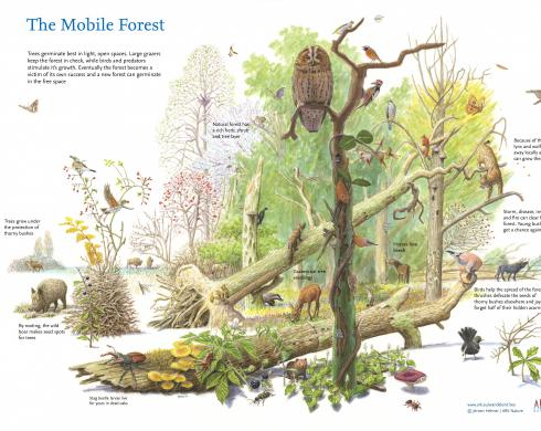 The Mobile Forest