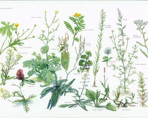 Zoekkaart Algemene Planten