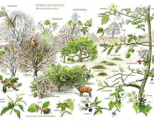 Zoekkaart Bomen en Struiken 2
