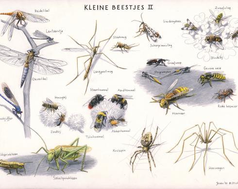 Zoekkaart Kleine Beestjes 2