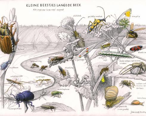 Zoekkaart Kleine Beestjes langs de beek