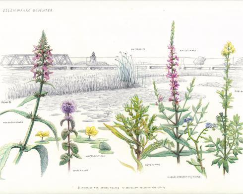 Zoekkaart Moerasplanten 2
