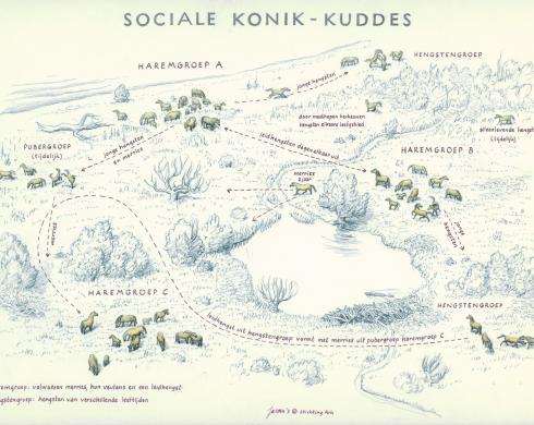 Zoekkaart Sociale Konik-Kuddes