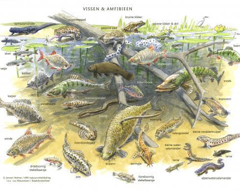 Zoekkaart Vissen en Amfibieën