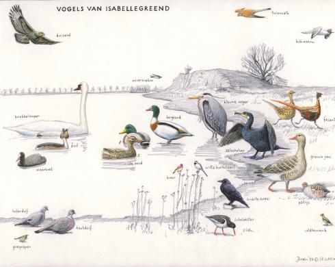 Zoekkaart Vogels van Isabellegreend
