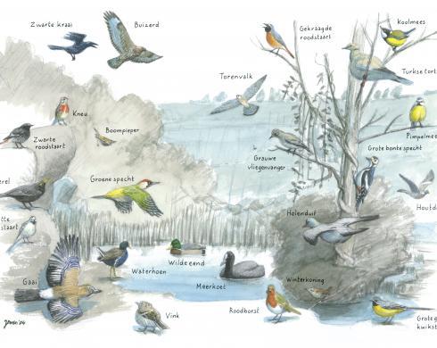 Zoekkaart Vogels Groeve Het Rooth