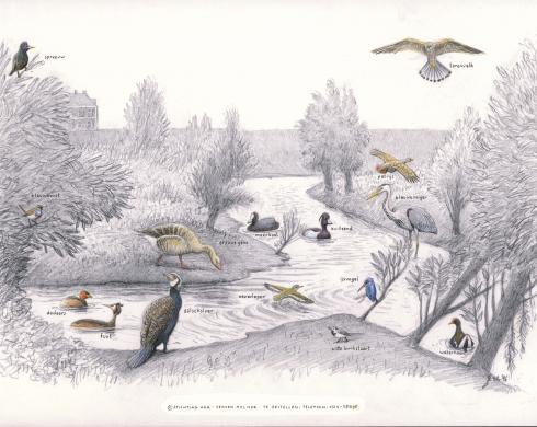 Zoekkaart Vogels Leeuwen 1