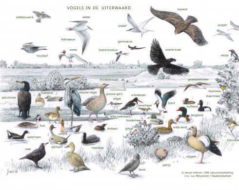 Zoekkaart Vogels van Uiterwaarden 1
