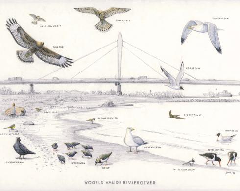 Zoekkaart Vogels van de rivieroever