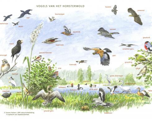 Zoekkaart Vogels van het Horsterwold