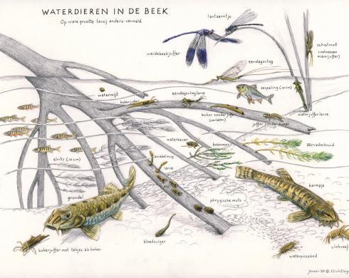 Zoekkaart Waterdieren in de beek